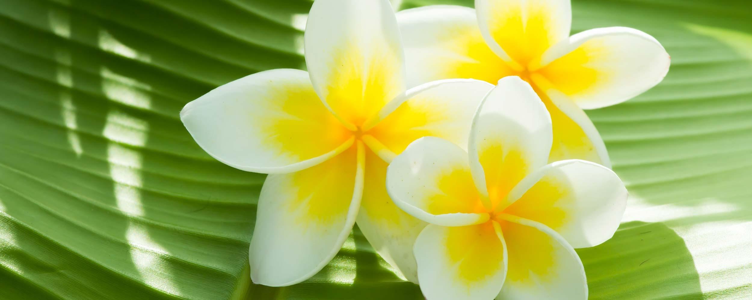 Polynésie Fleur de Tiarée
